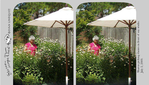 Evan Lindquist artist-printmaker, stereoview, Sharon picking daisies in front of my studio